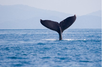 Puntarenas - Whale Season